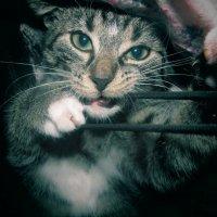 My Cat..)) :: Вероника Мамедова