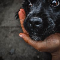 глаза собаки :: Анна Рэйн