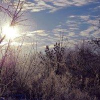 Мороз и солнце... :: ольга хадыкина