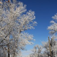 Первый снег2 :: Эля Османова
