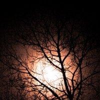 Ночь :: Марина Морозова