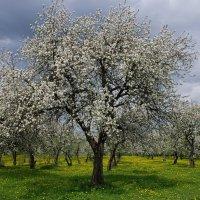 Владимир Фроликов - Цветущий сад