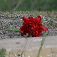 цветочек :: Валерия Кашуба