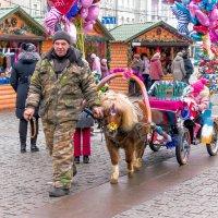 Год лошади наступил :: Юрий Стародубцев