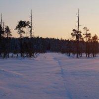 Зимний лес :: Иван Белоглазов