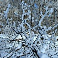 Снежинка :: Евгений Юрков