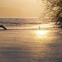 Золотое отражение :: Стил Франс