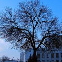 Дерево :: Олег Бережной
