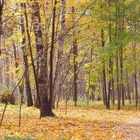 Осень в Сокольниках. :: Геннадий Александрович