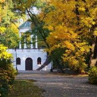 Осень в городе :: Александр Лонский