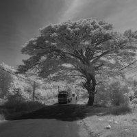 Дерево :: Василий Василец