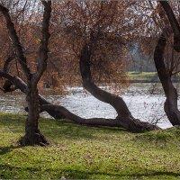 В парке Яркон. Израиль :: Lmark