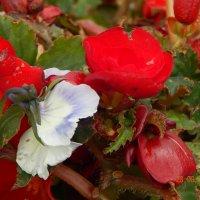 Цветы :: Katherine Mozgo