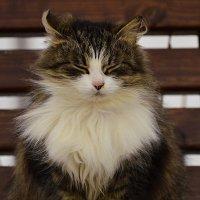 Кошка :: Олег .