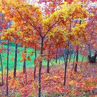 осенние краски :: Надежда Калинина