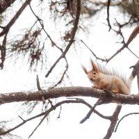 Белка на дереве :: Светлана Недельская
