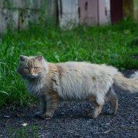 Животинка :: Екатерина Марфута