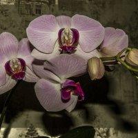 цветок :: Геннадий Свистов