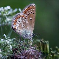 во саду ли в огороде :: Марат Валеев