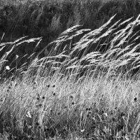 ветер :: Пётр Хилимончик