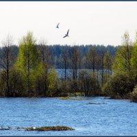 Весна на озере :: Сергей В. Комаров