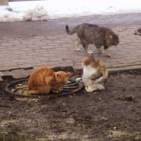 Кошки. :: Ольга Кривых