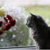 Опять за окном дождь... :: Ирина Абрамова