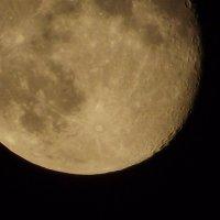 Завораживающая луна :: Алла Z