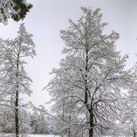 Зимний этюд :: Владимир