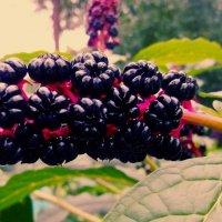 Растение. :: Анна Шелепова