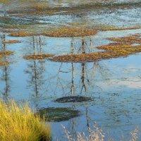 На болоте :: Алла Рыженко