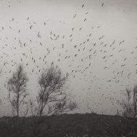 Птицы :: Илья Бескаравайный