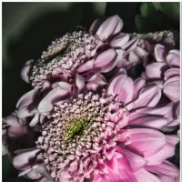 Цветы #2 :: Евгений Кочуров