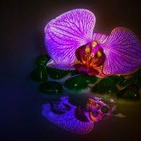 Орхидея :: Вера Бережная