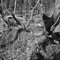 Лес дремучий, лес коварный... :: Evan Andrukhov