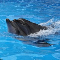 Дельфины :: VDVFox Denis