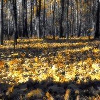 Осень :: Евгений Жиляев