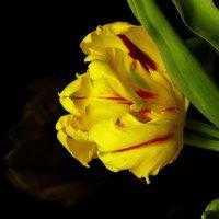 Желтый попугайчик :: Марина Морозова
