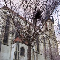 Прага,10 января 2014 :: Valeria Ashhab
