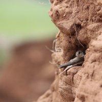 ласточкино гнездо :: Марат Валеев