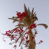 Palm :: Artemy Gunn