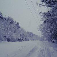 По дороге на прогулку! :: ИРИШКА КАЗАКОВА