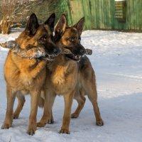 Ура! Дождались снега! :: Ирина Чикида