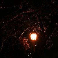 Ночь,улица,фонарь... :: Екатерина Иванченко