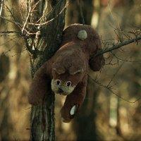 Медведь :: Сурикат Сусликов