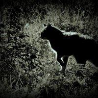 Ночной охотник! :: Владимир Шошин