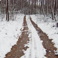 из прогулок по лесу :: Vladislav Rogalev