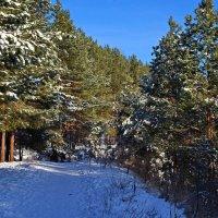 Солнце,снег,лес. :: Владимир Михайлович Дадочкин