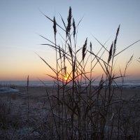 Трава и солнце ! :: Владимир Гилясев