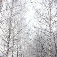 Собака на зимней аллее :: Наталья Золотых-Сибирская